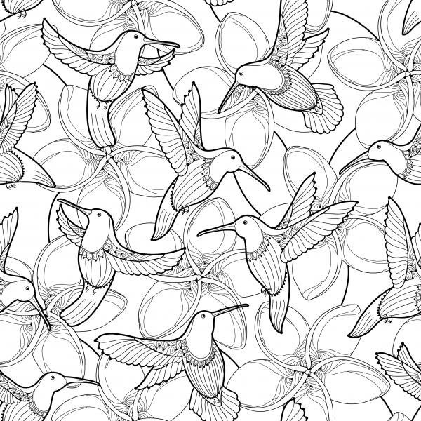 Seamless pattern with Plumeria flower and flying Hummingbird or Colibri in contour style.