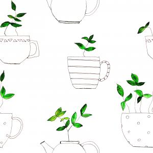 tea plants in tea cups