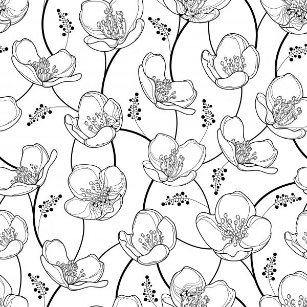Seamless pattern with outline Jasmine flowers in black on the white background. Elegance floral background with jasmin in contour style for spring design.