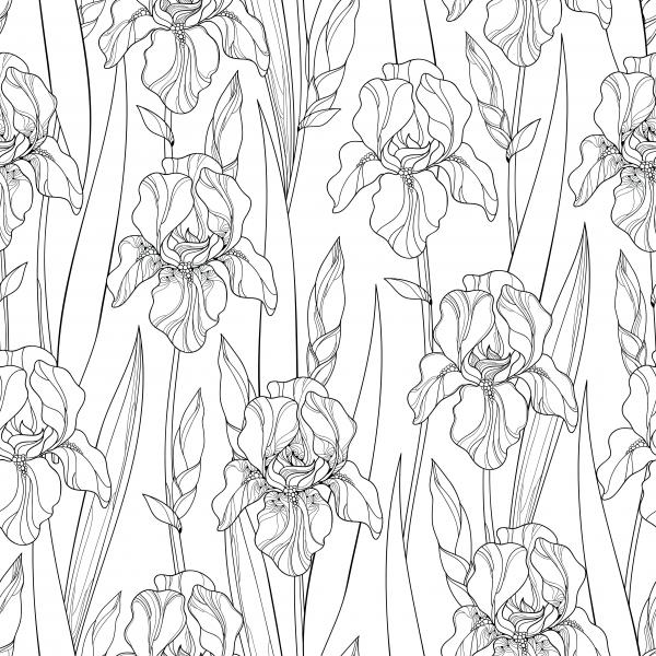 Seamless pattern with outline Iris flowers, bud and leaves in black on the white background.