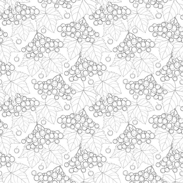 Seamless pattern with outline bunch of Viburnum or Guelder rose, leaves and berry on the white background.