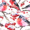 Winter watercolor pattern with bullfinches and rowan branch on white