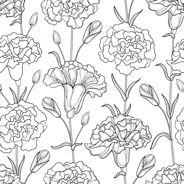Seamless pattern with outline Carnation or Clove flowers, bud and leaves in black.
