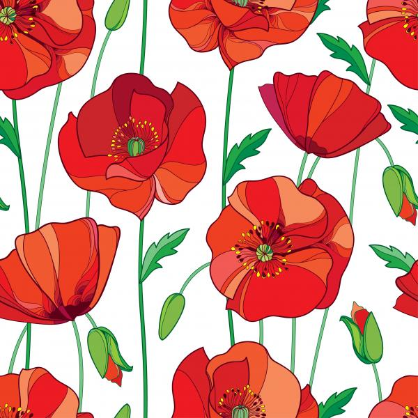 Pattern with red Poppy flower, bud and green leaves on the white background.