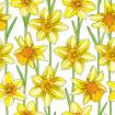 Seamless pattern with outline narcissus or daffodil flower in orange and yellow with green foliage on the white background.