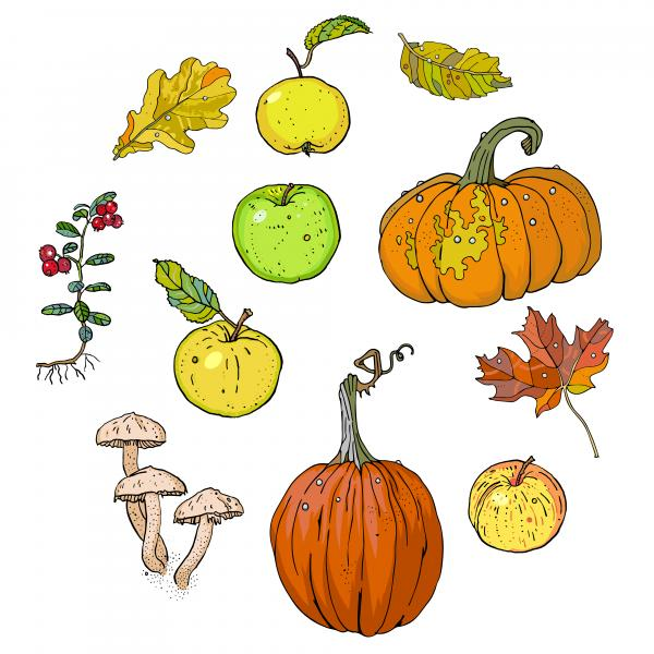 Autumn plants, fruits and vegetables.