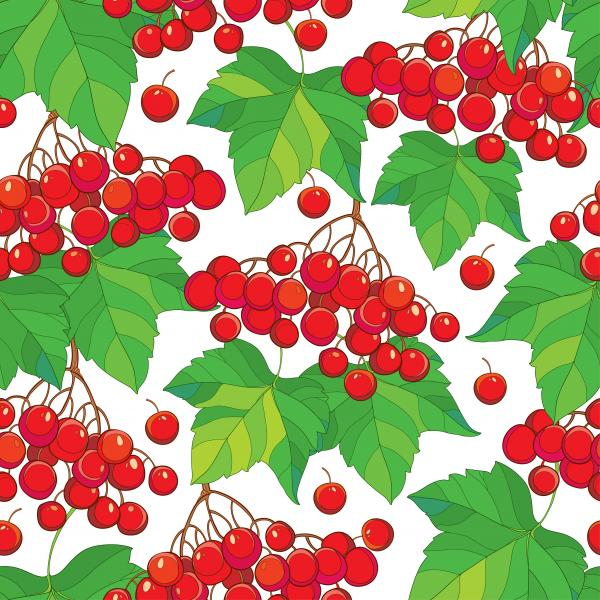Seamless pattern with bunch of Viburnum or Guelder rose, green leaves and red berry on the white background.