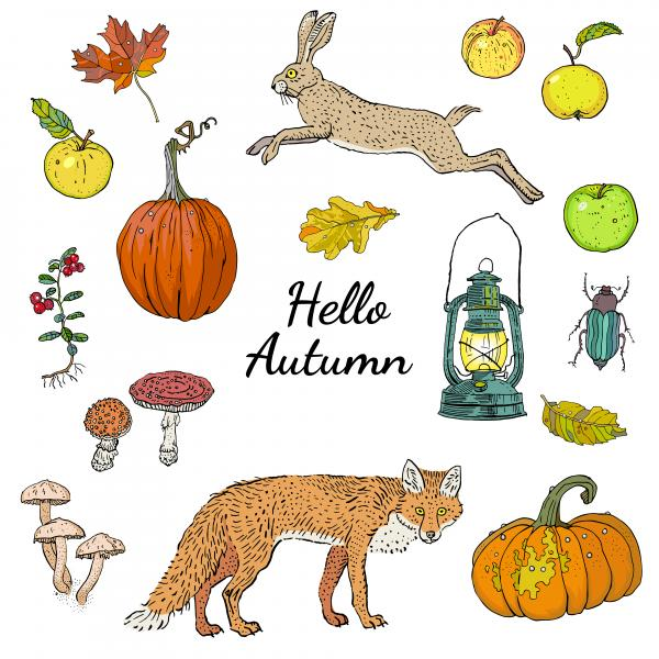 Hello autumn set, isolated objects with inscription: pumpkins, apples, oak and maple falling leaves, lingonberry, mushrooms, fox, hare, lantern. Harvest season.