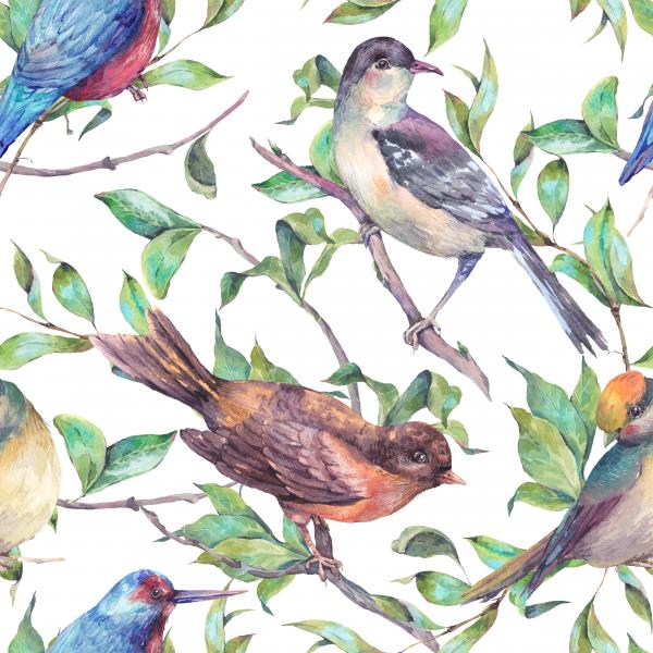 Watercolor birds on a branch