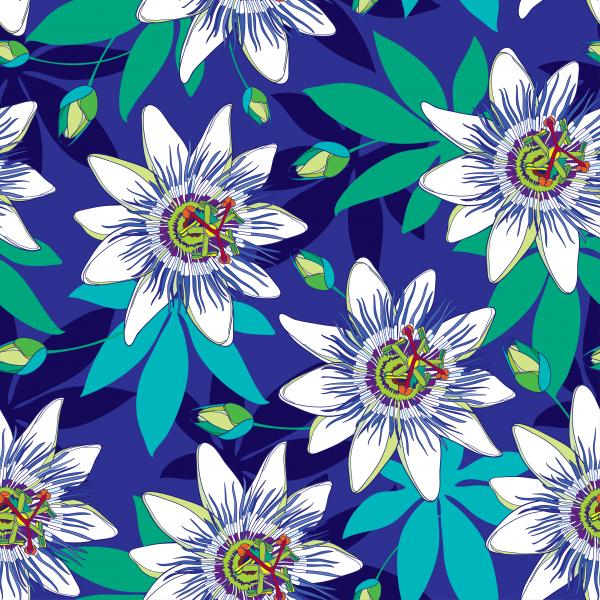 Pattern with tropical Passiflora or Passion flowers in blue and white, bud and leaves on the blue background.