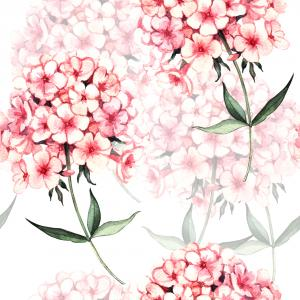 Watercolor pink phlox