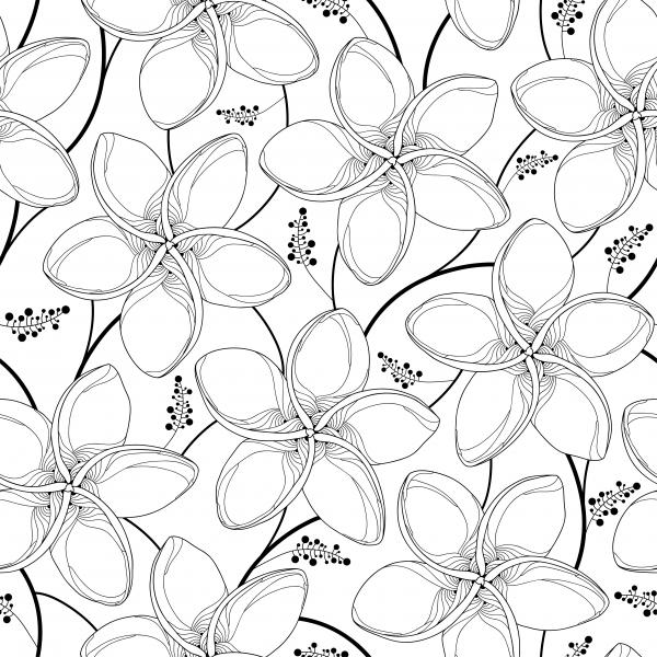 Seamless pattern with outline Plumeria or Frangipani flower in black on the white background.
