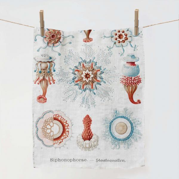 Towel / Siphonophore–Staatsqualle