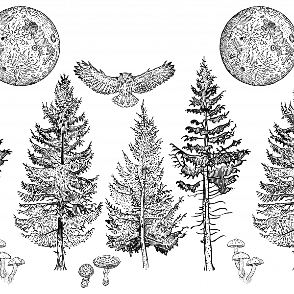 Full moon, owl, spruce forest.